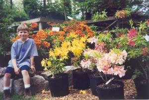 Nursery-Main Sales, Azaleas decid., Gabe, 5-99